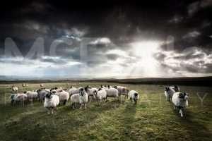 Return to the Land – Yorkshire Landscapes…