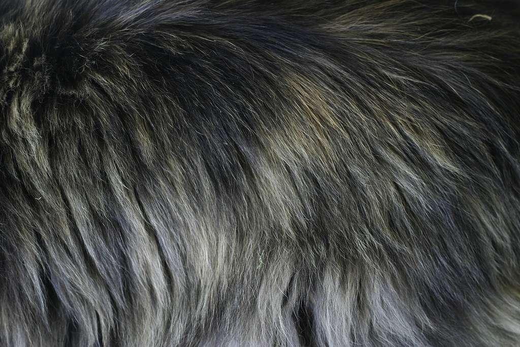 Furry Texture