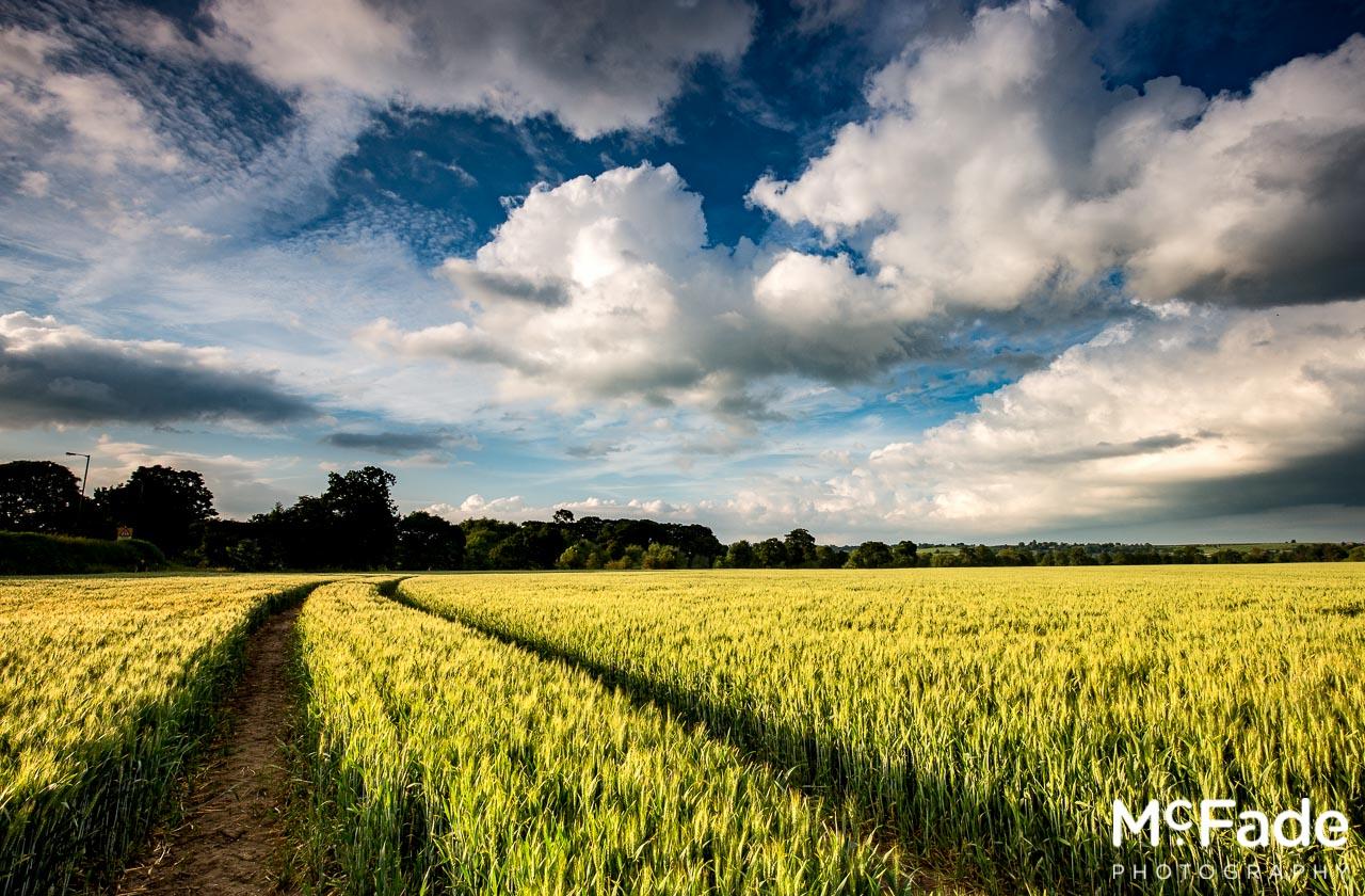 Harewood Wheat Fields-1